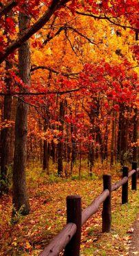 fall 3