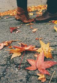 fall 27
