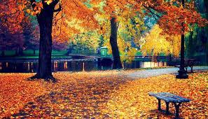 fall 32