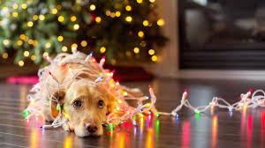 A Pet's Christmas 2