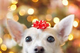 A Pet's Christmas 3